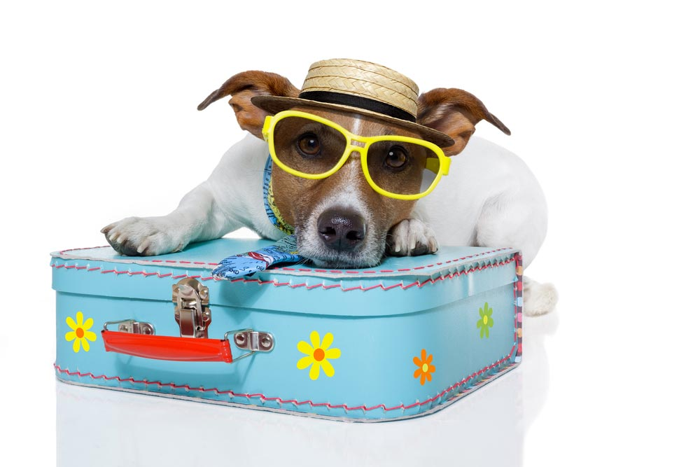 16 Things You Must Know The Next Time You Fly With Your Dog